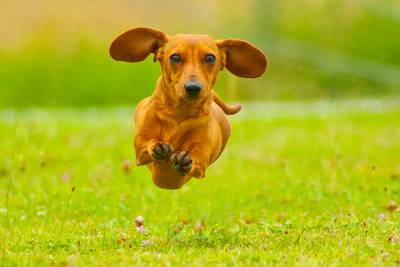 Top dog: Wiener dogs race kicks off Oktoberfest celebrations